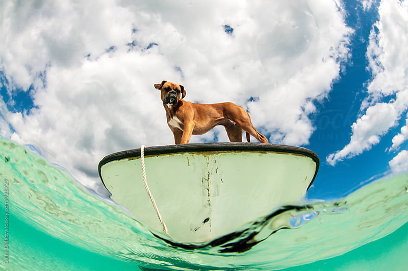 Boat dog by Caine Delacy for Stocksy United