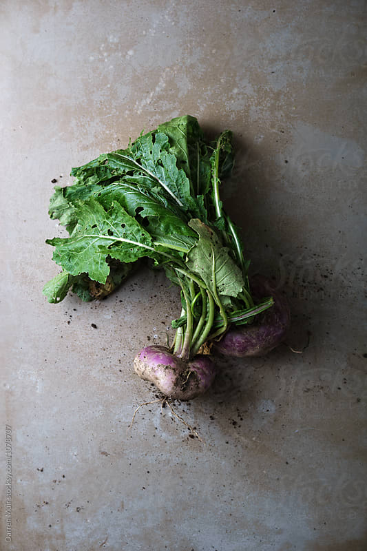 Freshly pulled turnip from the garden. by Darren Muir for Stocksy United
