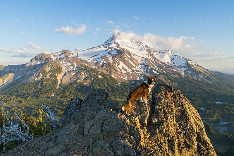 Dog looks at camera in front of Jefferson Mountain by Isaac Lane Koval for Stocksy United