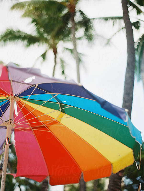 rainbow beach umbrella against palm trees by wendy laurel for Stocksy United
