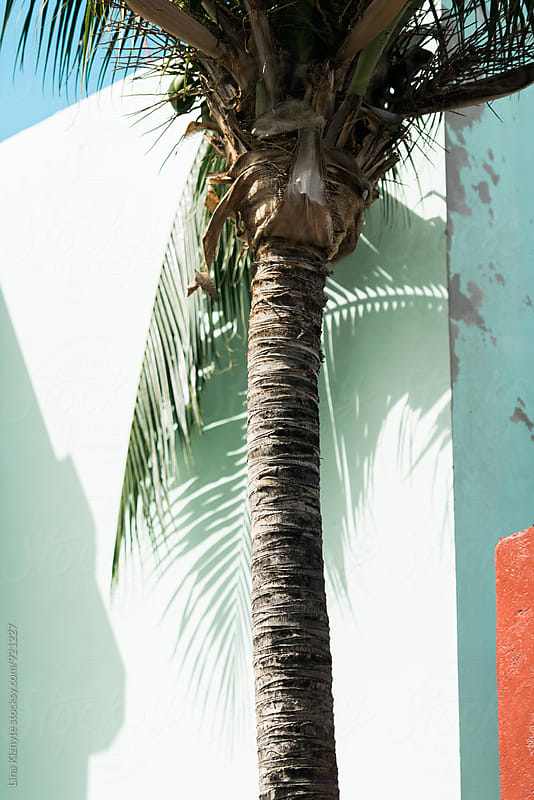 Palm Tree Shadow on a neon house by Lina Kiznyte for Stocksy United