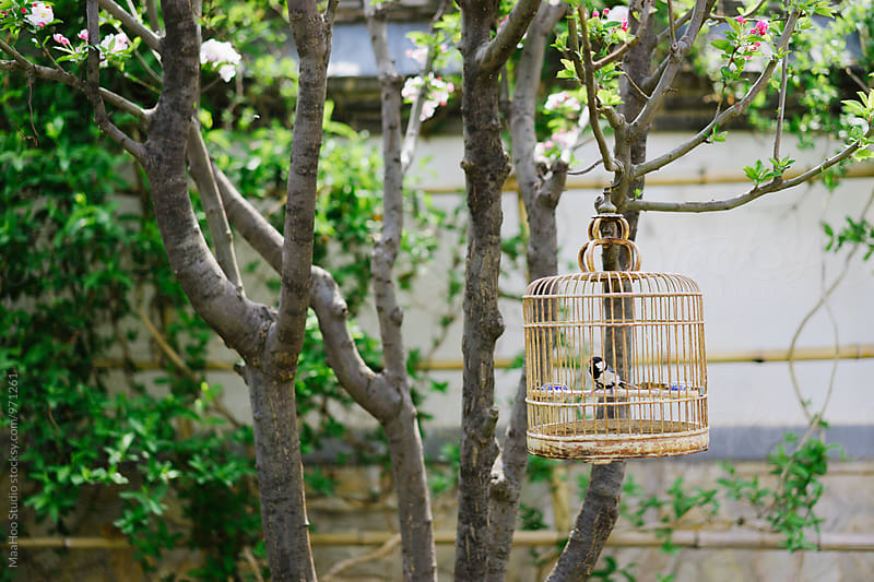 Bird cage hanging in a garden by Maa Hoo for Stocksy United
