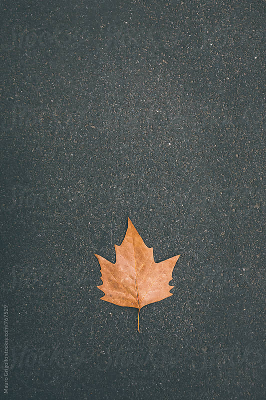 Leaf on floor. Fall by Mauro Grigollo for Stocksy United