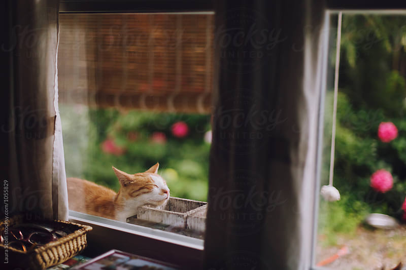 Red cat sleeps with head against wooden pots on windowsill by Laura Stolfi for Stocksy United