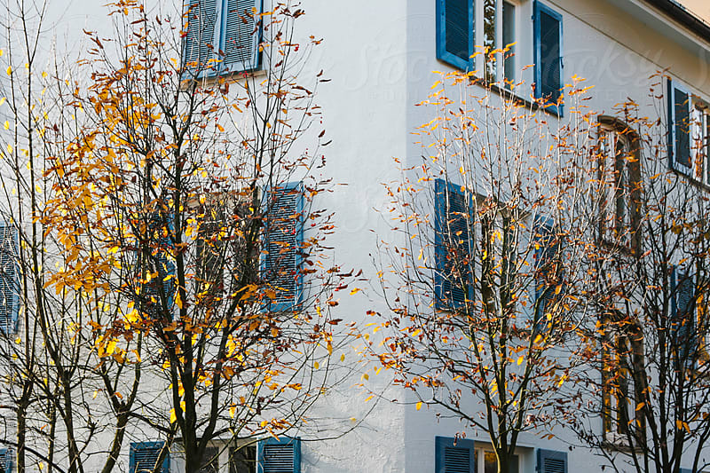 Autumn leaves on a tree beside a German building. by Holly Clark for Stocksy United
