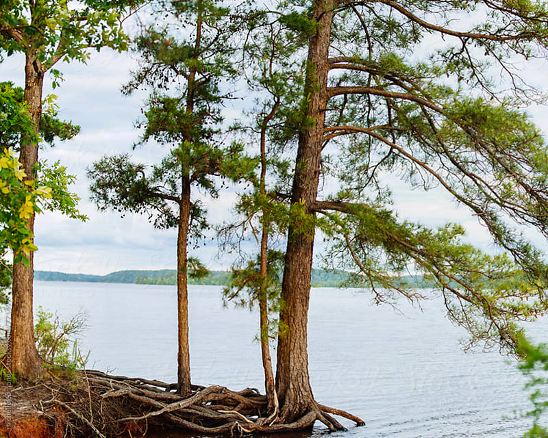 Trees on Lakeshore by michelle edmonds for Stocksy United