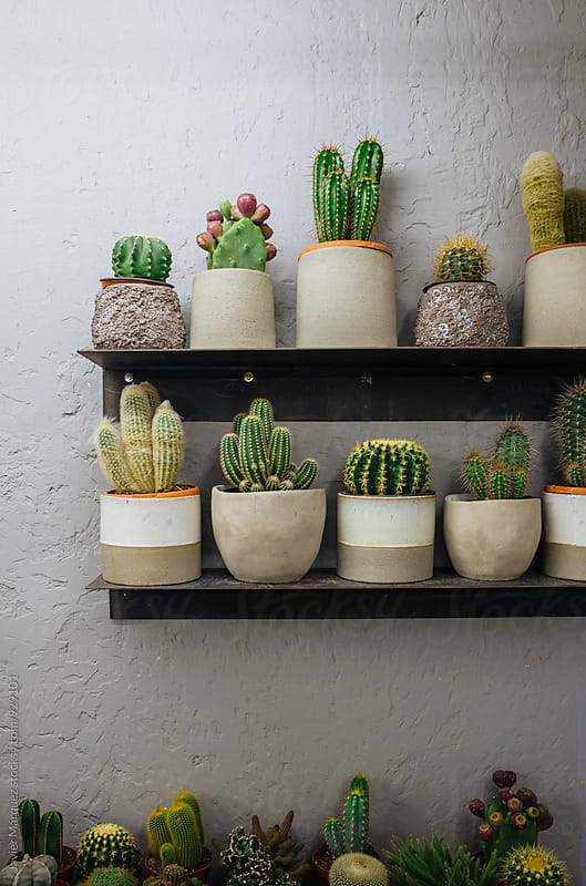 Cactus indoors garden by Javier Márquez for Stocksy United