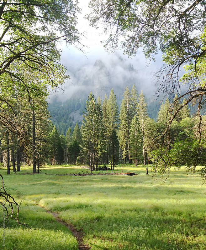Yosemite Meadow by Kevin Russ for Stocksy United