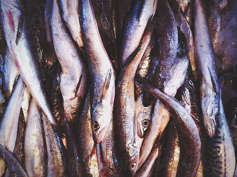 Fish at Chinatown market by Greg Schmigel for Stocksy United