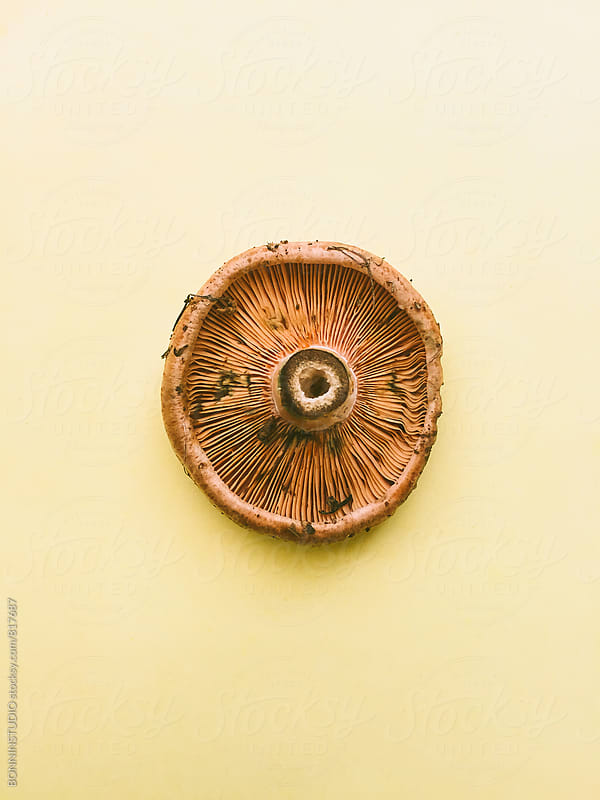 Overhead of a mushroom on yellow background. by BONNINSTUDIO for Stocksy United