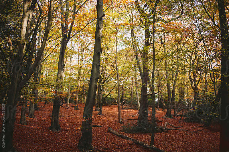 Autumnal floored woods by Kitty Kleyn for Stocksy United