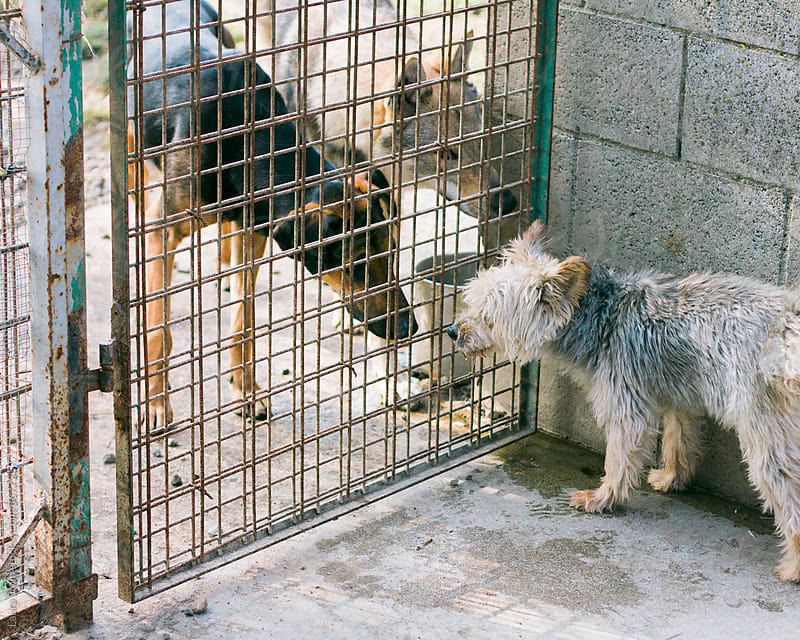 Dogs knowing each other through fence at dog pound by Laura Stolfi for Stocksy United