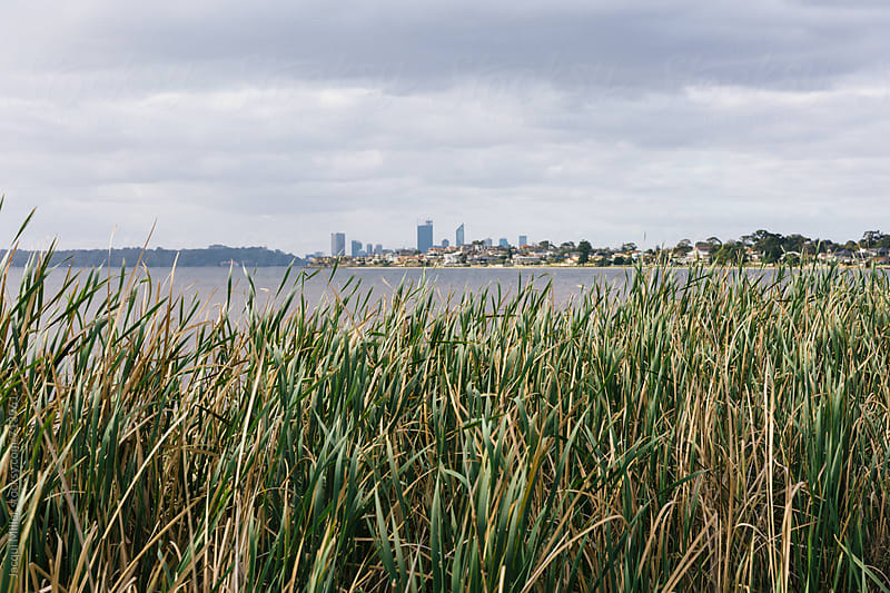 View over the Swan River toward Perth City, from Alfred Cove, Western Australia by Jacqui Miller for Stocksy United