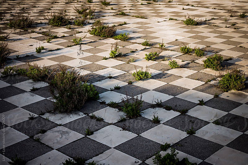 shrubs growing through checkered floor by Lior + Lone for Stocksy United