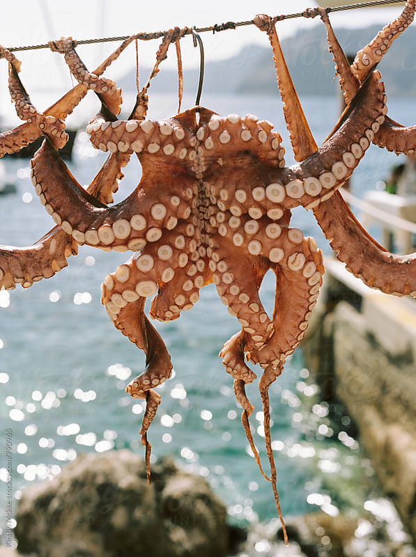 One octopus air drying on a line in Santorini, Greece by Kirstin Mckee for Stocksy United