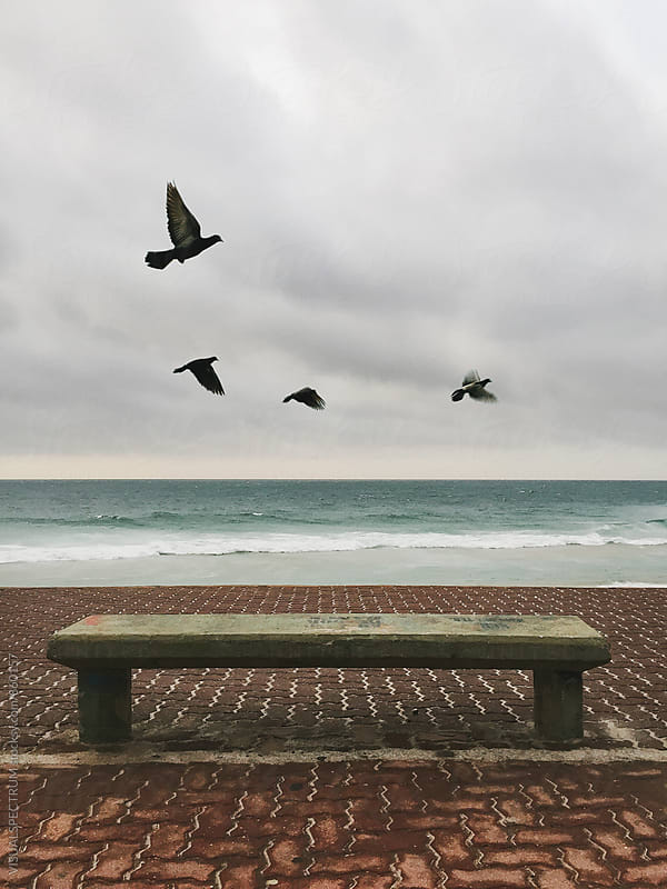 Four Birds Flying on Stormy Beach by VISUALSPECTRUM for Stocksy United