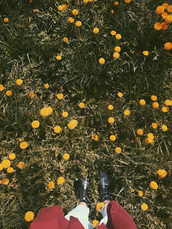 Female feet in dandelions by Maja Topcagic for Stocksy United