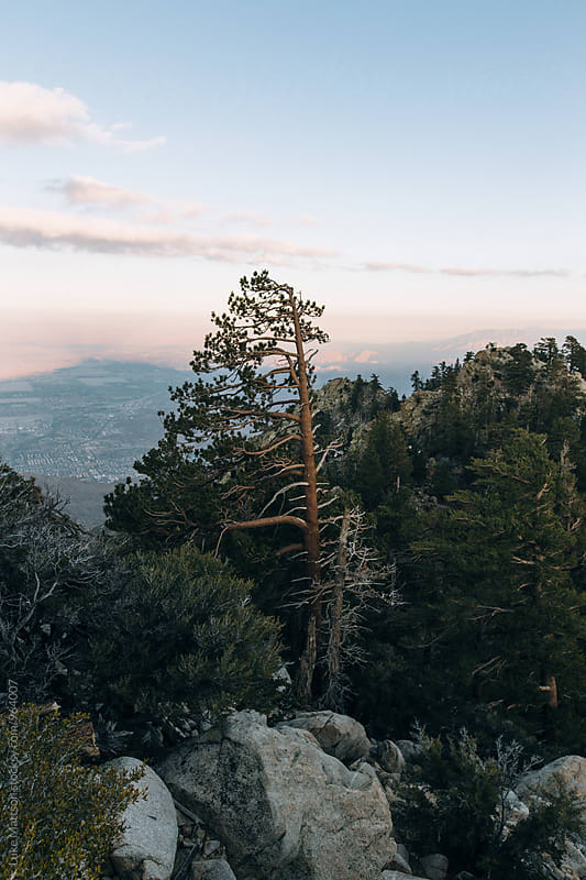 Trees And Mountain Boulders At Top Of Mt. San Jacinto by Luke Mattson for Stocksy United