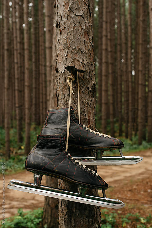 Old pair of ice skates on a tree by Gabriel (Gabi) Bucataru for Stocksy United