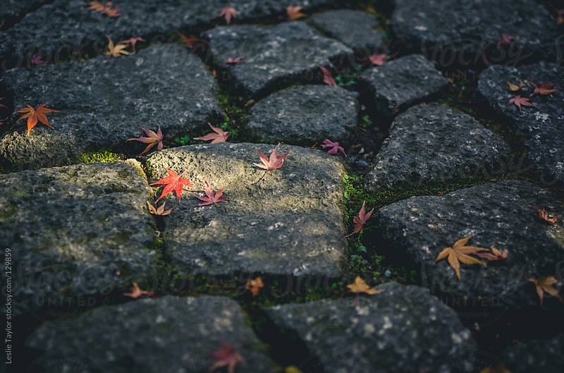Autumn Leaves On A Stone Path by Leslie Taylor for Stocksy United