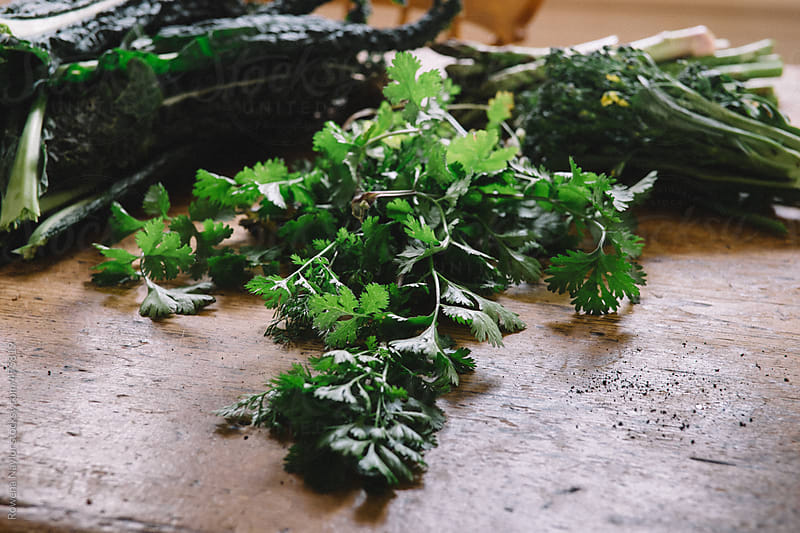 Fresh Harvested Organic Cilantro by Rowena Naylor for Stocksy United