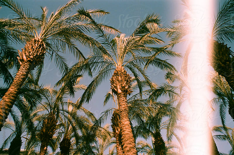 Palms in Jerusalem by Anna Malgina for Stocksy United