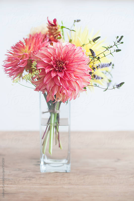 Dahlias by Helene Cyr for Stocksy United