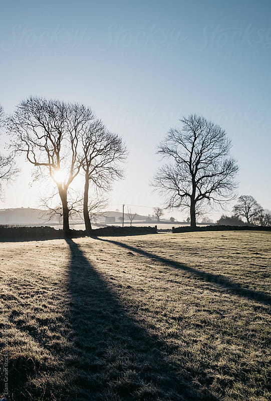 Sunrise behind trees on a frosty morning. Derbyshire, UK. by Liam Grant for Stocksy United
