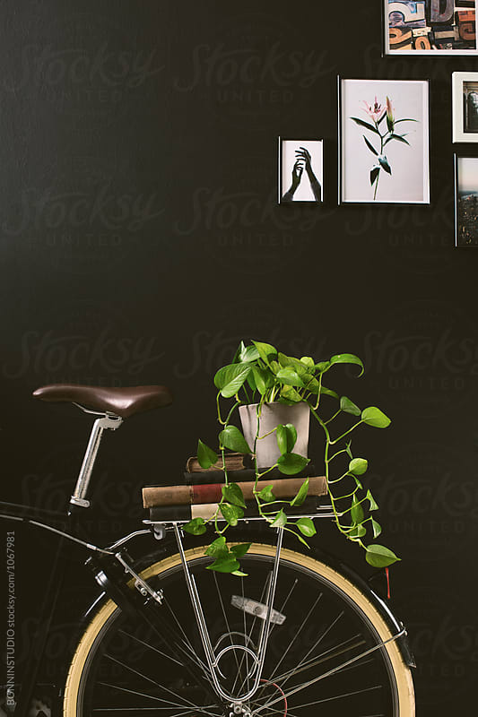 Closeup of a bicycle holding books and a plant on black wall.  by BONNINSTUDIO for Stocksy United