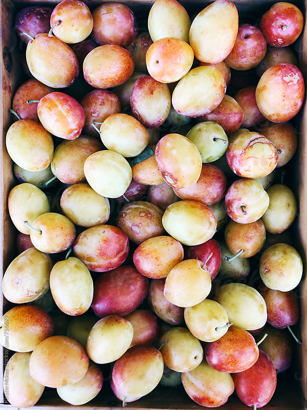 Crate of plums by Kirstin Mckee for Stocksy United