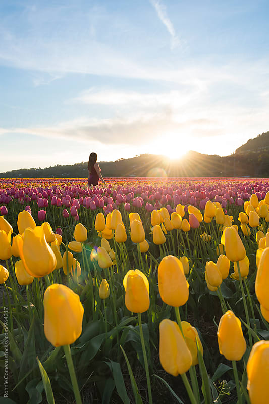 Woman In Tulip Field by Ronnie Comeau for Stocksy United