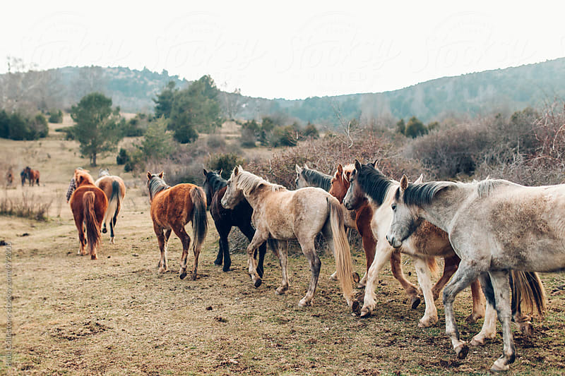 close up of a Group of wild Horses from behind by Jordi Rulló for Stocksy United