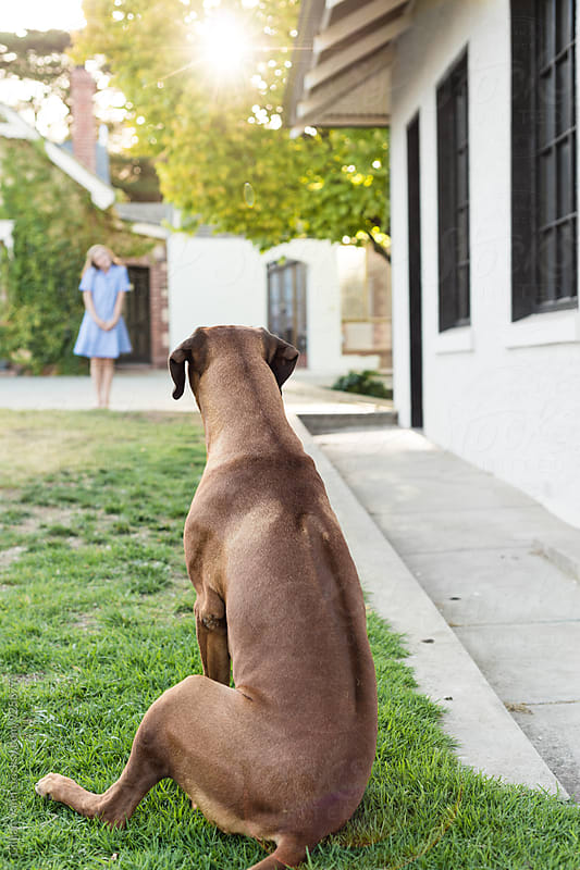 dog waiting for a young girl, with natural sun flare by Gillian Vann for Stocksy United