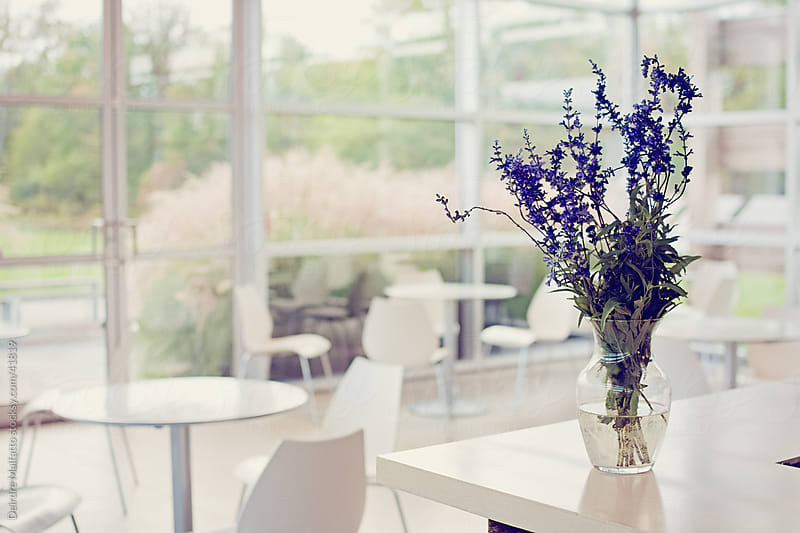 Bouquet of flowers in an empty modern cafe by Deirdre Malfatto for Stocksy United