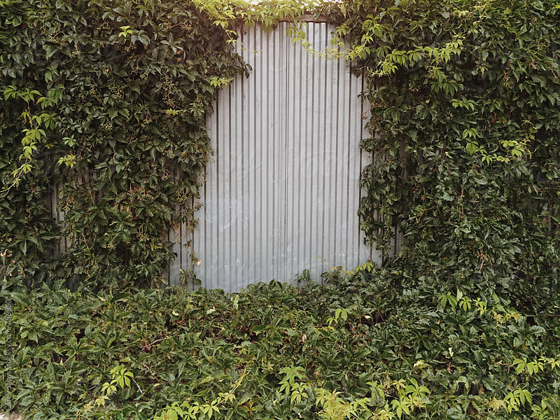 Metal wall with green vines by Carey Shaw for Stocksy United