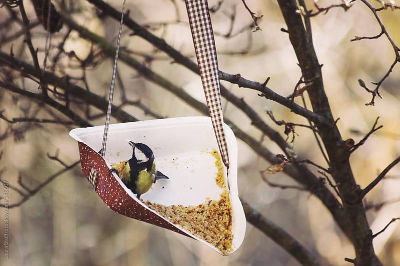 Feeding wild bird with chopped hazelnuts by Laura Stolfi for Stocksy United