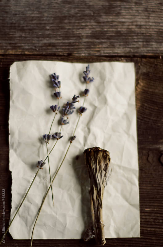 lavender and sage by Crissy Mitchell for Stocksy United