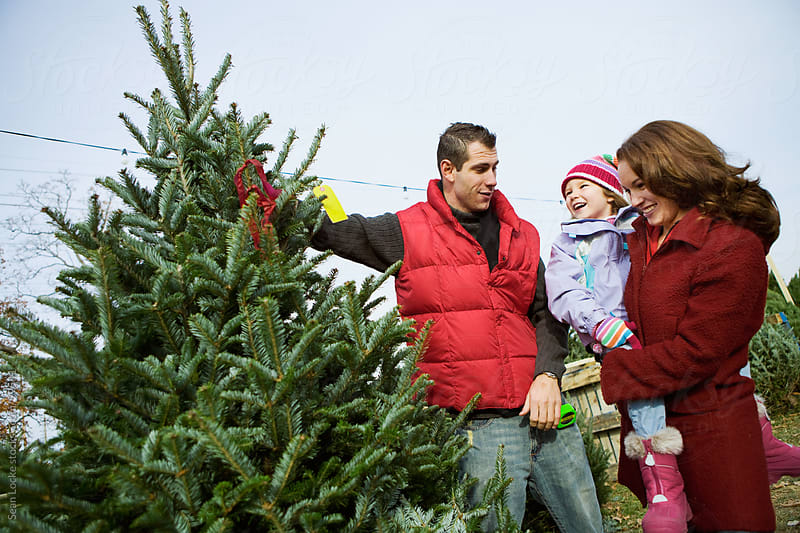 Tree Lot: Discussion In Family About Choosing A Christmas Tree by Sean Locke for Stocksy United