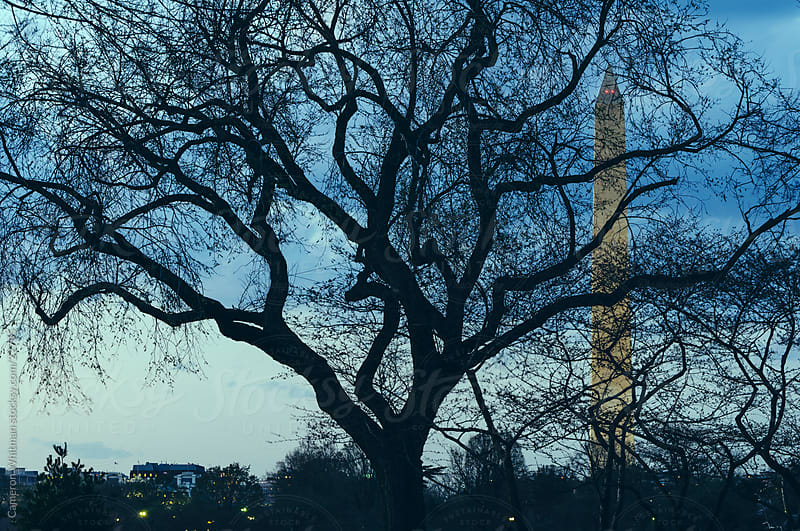 Washington Monument Behind Tree Silhouette  by Cameron Whitman for Stocksy United
