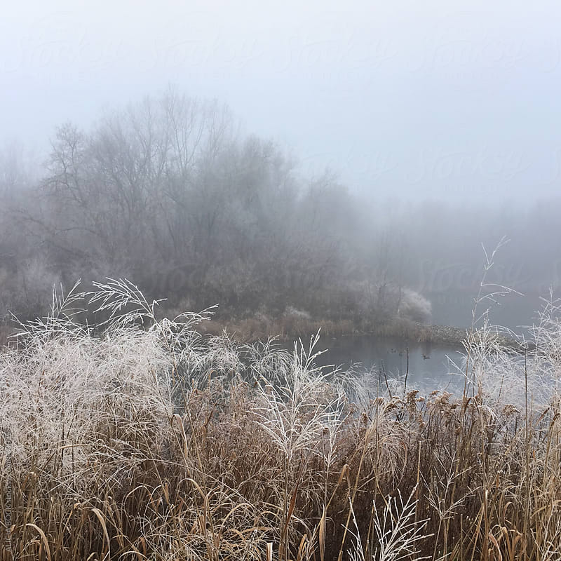 A Frost Covered Weeds And Pond On A Foggy Winter Day by ALICIA BOCK for Stocksy United