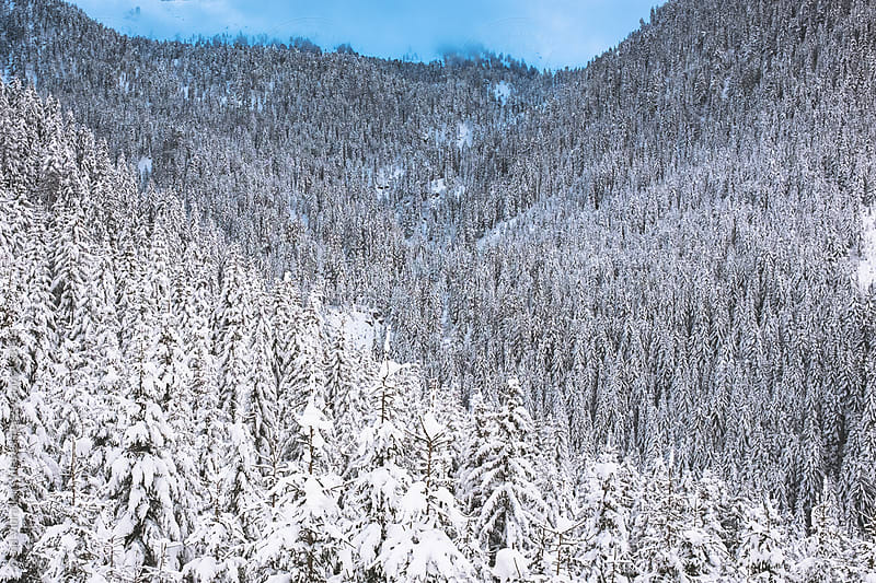 Winter Forest by Good Vibrations Images for Stocksy United
