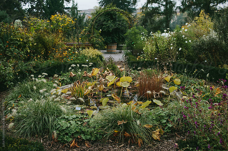 Beautiful garden in fall. by Julia Forsman for Stocksy United