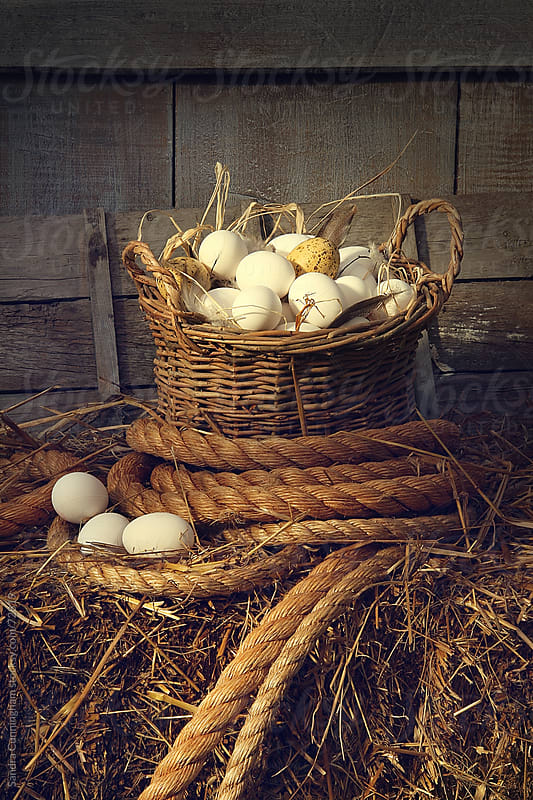 Eggs in wicker basket on a bale of hay by Sandra Cunningham for Stocksy United