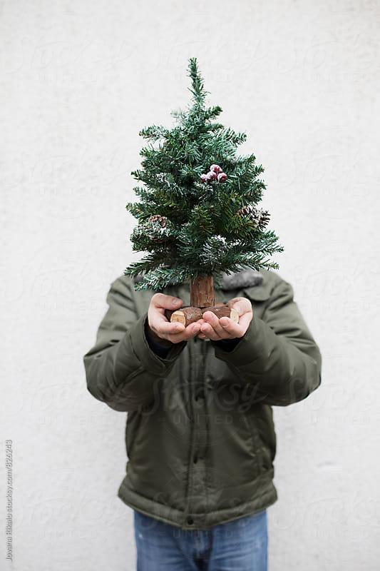Man holding mini Christmas tree by Jovana Rikalo for Stocksy United