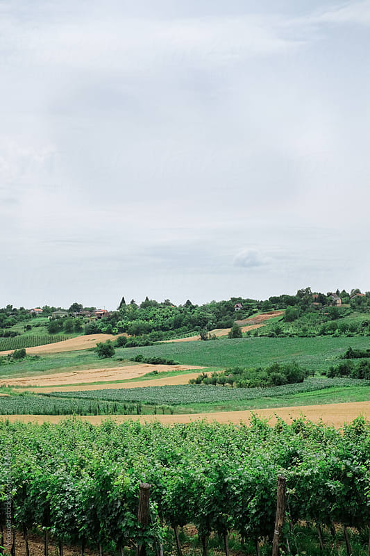 Green Landscape in Serbia by Mosuno for Stocksy United