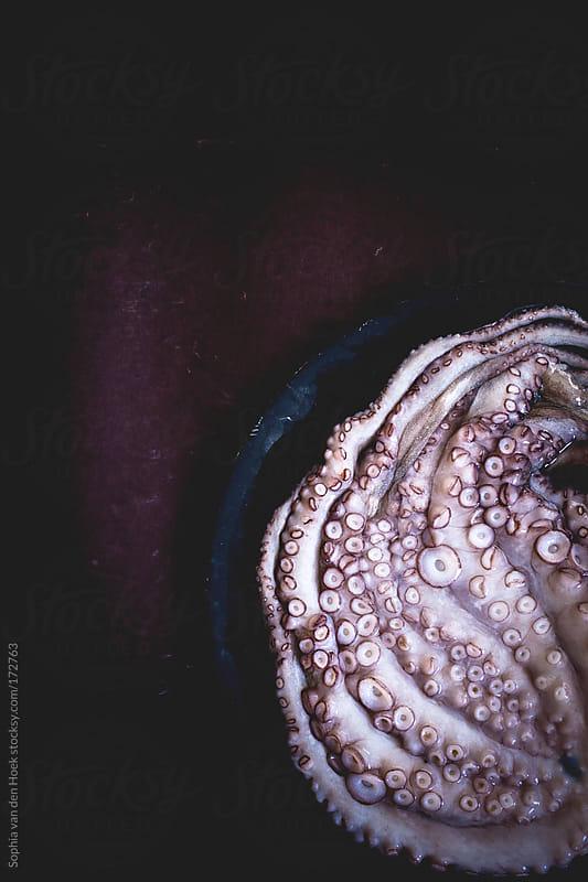 Octopus by Sophia van den Hoek for Stocksy United