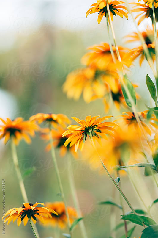Bright autumn flowers by Rebecca Spencer for Stocksy United