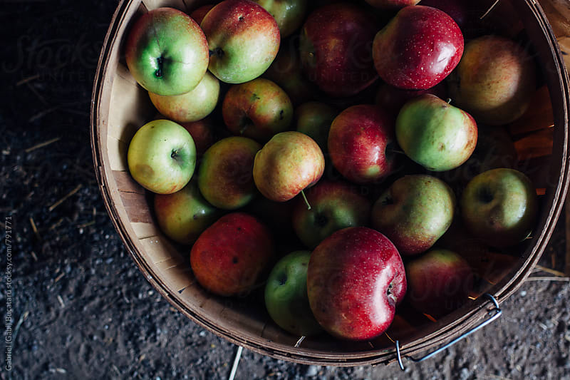 Heirloom Apples in a basket by Gabriel (Gabi) Bucataru for Stocksy United