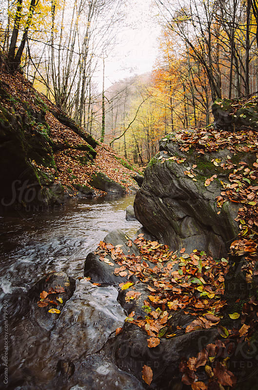 Mountain river in autumn by Cosma Andrei for Stocksy United