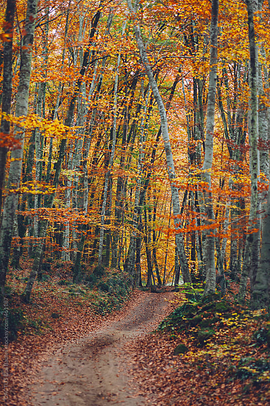 Autumn scene. Road in the middle of forest. by CACTUS Blai Baules for Stocksy United